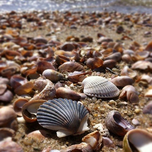 Shells on the Beach by stevegarfield