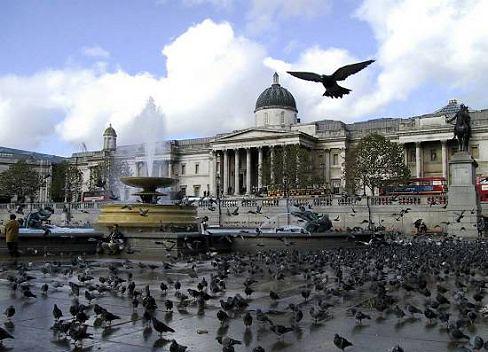 Palomas en Trafalgar Square