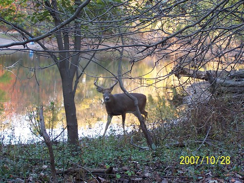 Deer inside the forest preserve