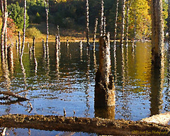 On The Lake (DON ULMER PHOTOGRAPHY) Tags: trees water reflections olympus naturesfinest reservoirs anawesomeshot