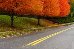 Takolusa (wmliu) Tags: road autumn usa tree fall season us newjersey nj foliage monmouth canonef2470mmf28lusm holmdel 2470mm wmliu takolusa