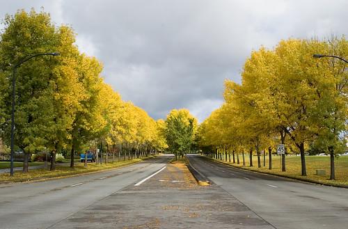 follow the yellowtree road