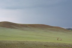 Camels in grass dunes (Jeff Bauche._.)) Tags: mongolia lanscape countryside trek trekking roll film kodak portra mongoliancountryside mongolianlandscape landscape nature mongolie bauche jeanfranoisbauche jeffbauche jeff photography mongol mongolian gaia paysage voyage voyages travel travels jeffbauche jeffbauchehotmailcom