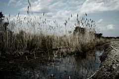 (The Lydiannacat) Tags: reflection broken nature water grass clouds landscape mashed mess ditch marsh twigs butchered