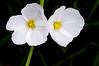 Unidentified flowers in the garden -- DSC_1884