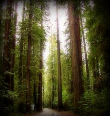 Thru The Woods (scrapping61) Tags: california trees friend