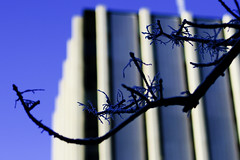Branching out (Chris Beauchamp) Tags: winter calgary university frost branch library copyrightchrisbeauchamp20072009