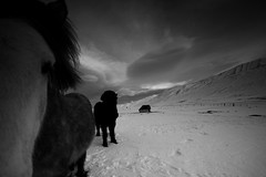 Cold & Curious (Andri Elfarsson) Tags: pictures desktop camera trip travel winter wallpaper vacation portrait sky horses blackandwhite bw horse white mountain holiday snow black art texture ice nature closeup canon dark landscape island mono frozen iceland high highresolution skies photographer darkness photos desk quality fineart north fine large freezing frosty monochromatic full size resolution fullresolution l 40 northern wintersnow 5k icelandic svarfaardalur holyday andri 17mm frozenice winterfrost freedesktop kyrr freewallpaper landscapephotographer 1740canon elfarsson andrielfarsson wallpaperbw ljosmynd canon17mm40l desktopbw desktopblackandwhite wallpaperblackandwhite