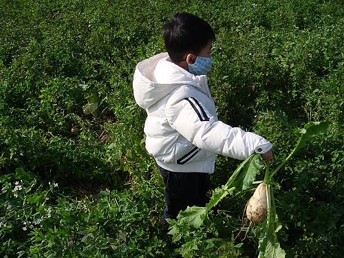 20080217Ray 拔蘿蔔