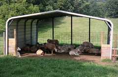 Sheep 201 Housing