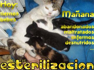 esterilizacionredimensionada