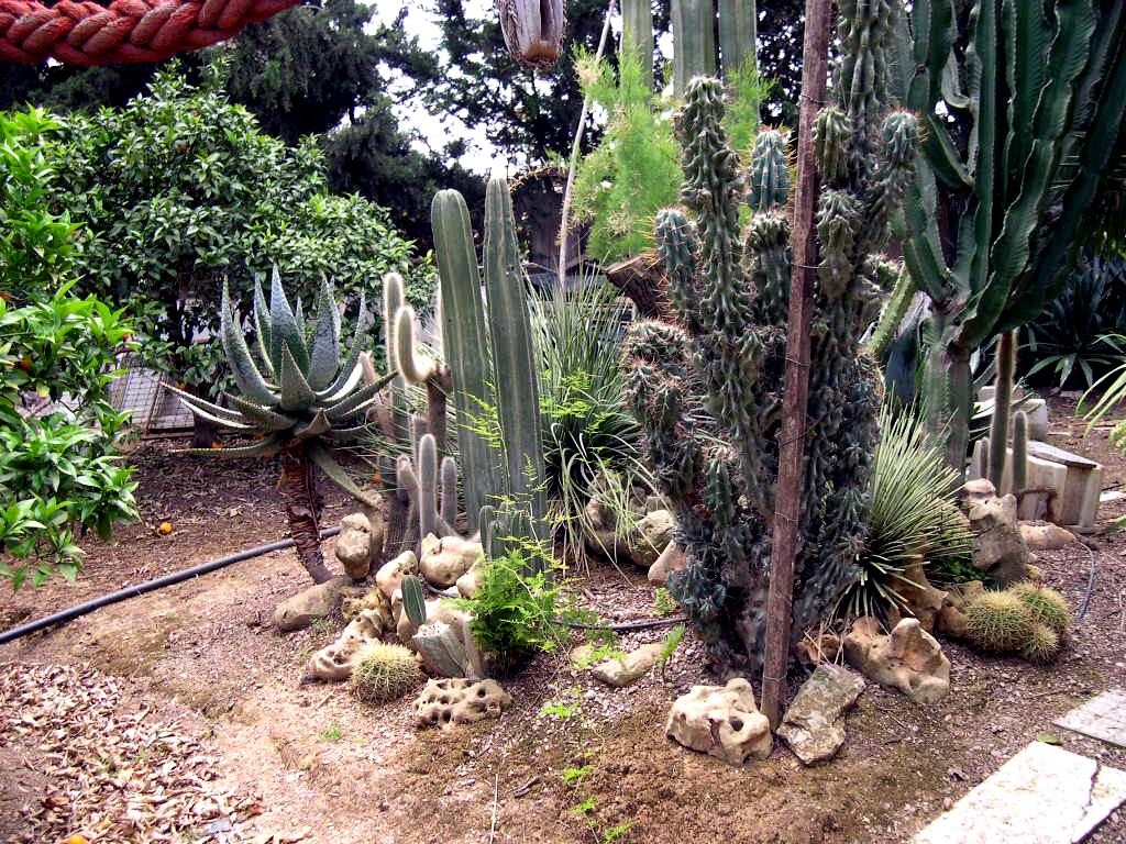 lugar cicas suculentas y cactus que maravilla de jardin