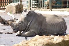 Longleat Safari Park #43