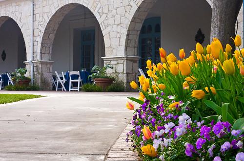 Flowers Along an Arboretum Pathway