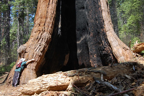 20080504 Tree Hugger