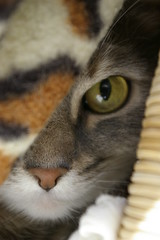 Vem där? (Kenny_lex) Tags: cute eye cat kitty shy hide gato katt misse öga gullig kisse