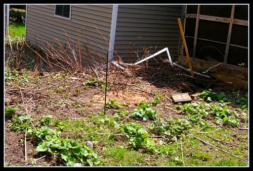 garden 08 014