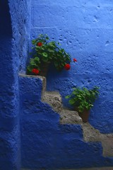 Santa Catalina - Arequipa  Peru (Malys) Tags: blue red flower stairs diamondclassphotographer flickrdiamond