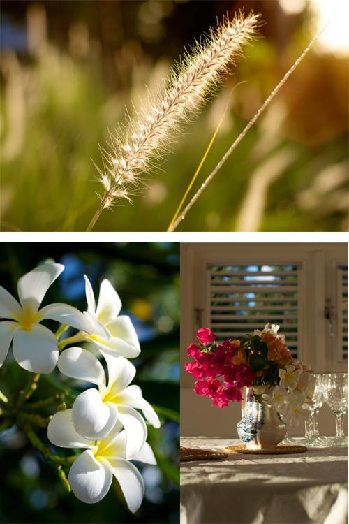 Barbados flowers