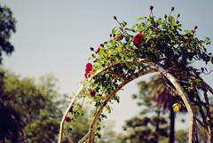 Secret garden (Rubo Stars & Lore Stars) Tags: auto red roses naturaleza nature vintage garden 50mm dof cross pentax bokeh secret trellis processing rosas secreto photoart arco vigo jardn chinon rojas f17 cruzado proceso castrelos k200d tecendoredes rlstars