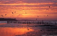 Sky On Fire! (Squiddy1963) Tags: sunset sea sky beach clouds gold dusk gimp olympus quay dorset f18 45mm sandbanks omd lightroom mzuiko bestofblinkwinners blinksuperstars