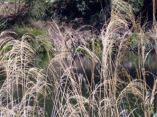 day grasses