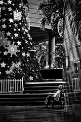 Para la Navidad hay que entrenar  /  For Christmas it's necesary to train (jose cisneros) Tags: stairs mall venezuela banco palmeras christmastree caracas estrellas pino centrocomercial escaleras pams descanso receso arboldenavidad 123bw