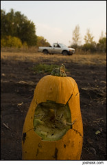no country for old gourds.