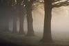 Trees Love Fog (algo) Tags: trees england topv111 misty fog photography topf50 topv333 bravo searchthebest topv1111 topv999 algo topv3333 topf100 halton 1000f birdpoem 50f 200750plusfaves