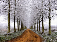 Time (larsvandegoor.com) Tags: road christmas trees winter white snow cold grass landscape frost path hoarfrost thenetherlands lane snowscape treelined specialpicture top20wintertime vosplusbellesphotos panoramafotogrfico
