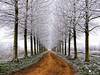 Time (larsvandegoor.com) Tags: road christmas trees winter white snow cold grass landscape frost path hoarfrost thenetherlands lane snowscape treelined specialpicture top20wintertime vosplusbellesphotos panoramafotográfico