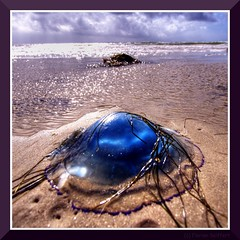 Ufo am Strand (Florian Seiffert (F*)) Tags: blue startrek flickr jellyfish object magic alien gimp ufo nordsee hdr kirk 2007 qualle daenemark objekt rm golddragon snderstrand abigfave platinumphoto superbmasterpiece diamondclassphotographer betterthangood theperfectphotographer soenderstrand multimegashot blauequalle