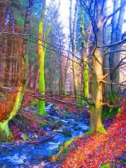 Tree of joy (haikus*) Tags: tree forest wald baum enchanted damncool wowiekazowie ilovemypic imagesofharmonie