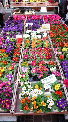 Market, Solothurn