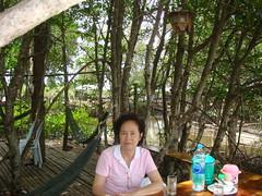 ๘. กินอาหารเที่ยงที่ภัตตคารในป่าชายเลน - ร้านฟาร์มปูนิ่ม