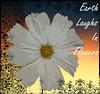Sappy [For all the Ladies] (.Carter.) Tags: seattle sunset flower macro texture photo washington petal daisy wa shopt impressedbeauty sunsetflower wonderfulworldofflowers damniwishidtakenthat auniverseofflowers passionateinspirations