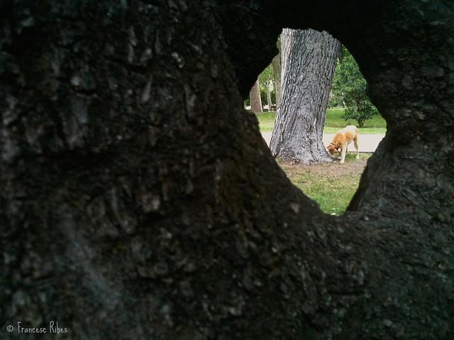 (351) Mi pequeño homenaje a H. D. Thoreau (o cómo mirar a través de la naturaleza)