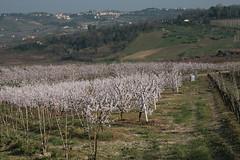 Romagna (_raffaella_) Tags: primavera marzo fioritura