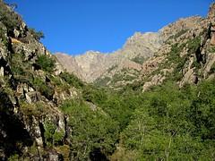En montant au Saltare: Punta Minuta et ravin de la Solitude