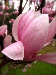 breast cancer awareness flower