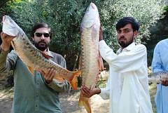 Fish, Mirpur (Qaiser18) Tags: river fishing ali kashmir amily angling azad mirpur poonch masheerfish