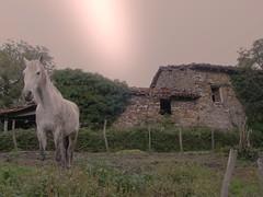 zaldi solitarioa (iosebasque) Tags: horse house home caballo campo euskalherria euskadi basquecountry paisvasco etxea plateado gipuzkoa zaldia baserria naturesfinest mendiola aretxabaleta impressedbeauty ltytr2 ltytr1