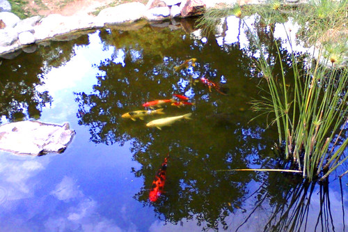 coi pond 2