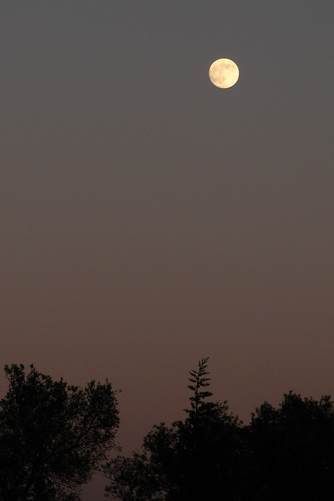 Full moon at dusk #1