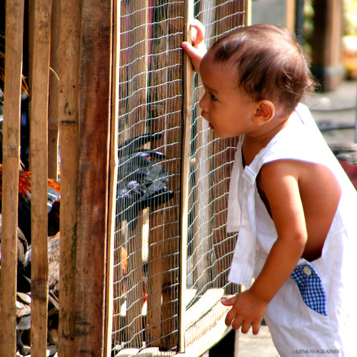 Young boy looking inside the chicken cage Pinoy Filipino Pilipino Buhay  people pictures photos life Philippinen  菲律宾  菲律賓  필리핀(공화국) Philippines