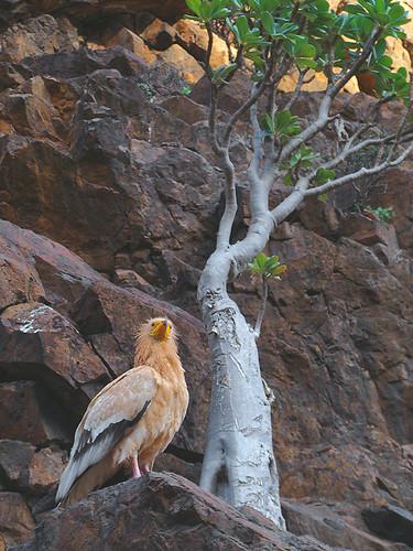 Fotografía:  por Soqotra (Yemen)
