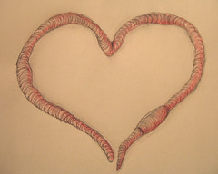 heartworm (Rakka) Tags: heart drawing valentine valentines worm valentinesday heartworm myfunnyvalentine thingaday thingaday08 thingaday2008
