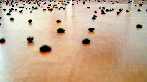 spilled coffe beans