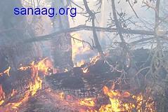 Daalo on fire (Yusuf Dahir's Somaliland Photos) Tags: somaliland