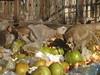 Monkeys looking for breakfast